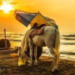اسب و دریا