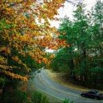 جاده جنگلی کلاردشت