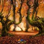 جنگل در پاییز