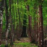 پارک جنگلی سیسنگان