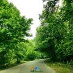جاده جنگلی کشپل