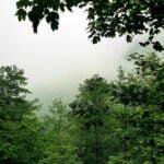 جنگل کشپل جمستان