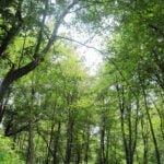 جنگل کشپل