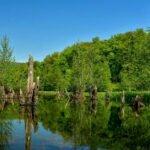دریاچه ممرز در تابستان