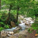 رود لاویج در پارک جنگلی کشپل