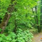 پارک جنگلی کشپل چمستان