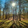جنگل اطراف در زمستان