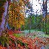 نمای جنگل و مرداب